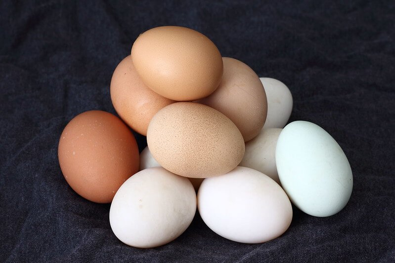 Eggs are low in histamine
