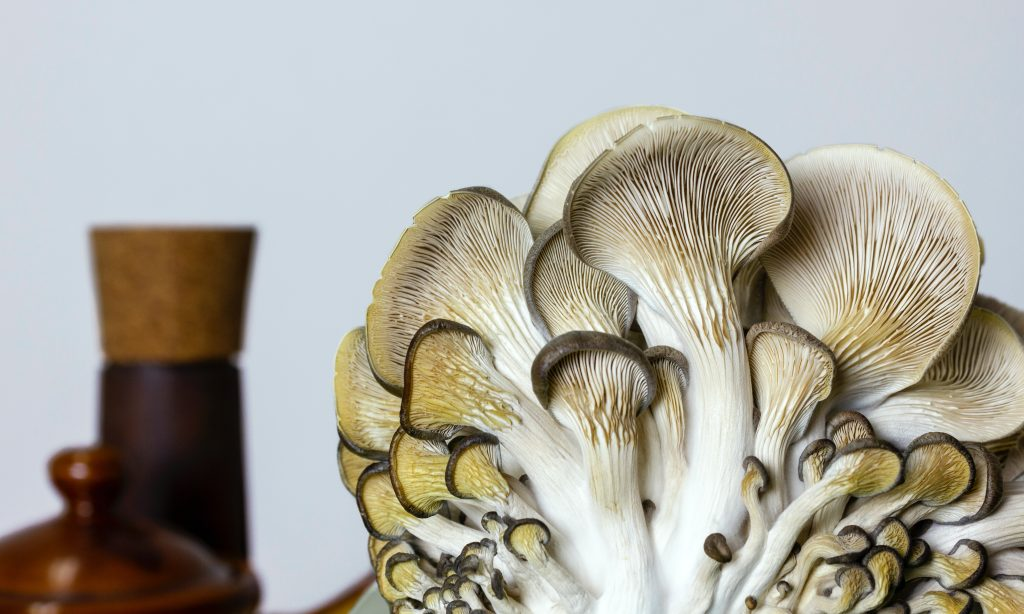 healthy oyster mushrooms